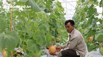 Nghệ An: Nhiều chính sách 'tiếp sức' cho nhà nông