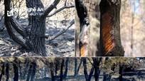 Núi rừng Nghệ An tan hoang sau hàng loạt vụ cháy