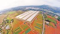 Nghệ An đề nghị chuyển mục đích sử dụng gần 280ha đất lúa để thực hiện các dự án trọng điểm