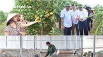 Nghệ An chuyển 69 đơn vị ngành nông nghiệp về UBND cấp huyện quản lý trong quý IV/2019