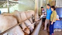 Tân Kỳ xây dựng chuỗi giá trị trong chăn nuôi VietGAP