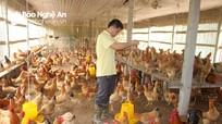 Gần 6.000 nông dân Nghệ An được đào tạo nghề nông nghiệp