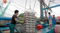 Ngư dân Nghệ An luộc mực ngay trên biển để giữ giá