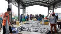 Đánh bắt trên Vịnh Bắc Bộ, ngư dân Nghệ An trúng đậm cá thu