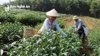 Tạo sinh kế bền vững cho hộ mới thoát nghèo ở Nghệ An