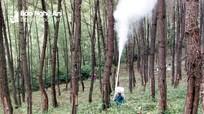Tạo bước đột phá trong phát triển rừng ở Yên Thành