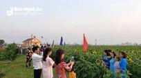 Cánh đồng hoa đa sắc ở Nam Đàn mở cửa đón du khách