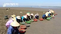 Nhọc nhằn nghề cào ngao thuê ở Nghệ An giữa trời nắng gắt