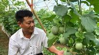 Ưu thế mô hình trồng dưa lưới ngoài trời đầu tiên ở miền Tây Nghệ An