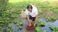 Ông nông dân đưa ốc bươu đen Quỳnh Lưu về nuôi 'thu lãi lớn' trên đất Anh Sơn