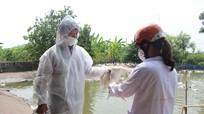 Nghệ An: Dịch bệnh gia súc tăng do thiếu thú y cấp xã