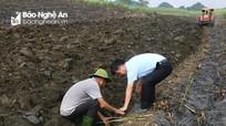 Nông dân Tân Kỳ gắn bó với mía - cây trồng chủ lực