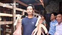 Độc đáo cặp nhung hươu nặng 3,3 kg ở Nghệ An