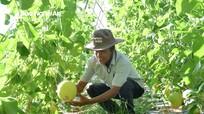Nghệ An: 20 xã phấn đấu về đích nông thôn mới nâng cao