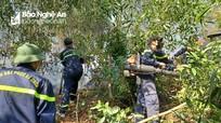 Nỗ lực dập đám cháy rừng thông hơn 20 năm tuổi tại Hưng Nguyên