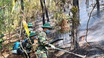 Kịp thời dập tắt cháy rừng ở Đô Lương