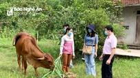 Nghệ An: Cho vay tạo sinh kế bền vững đối với hộ nghèo và hộ cận nghèo