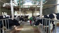 Gần 100 chủ trang trại được tập huấn kỹ thuật chăn nuôi bò sữa