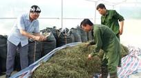 Mở rộng diện tích cây dược liệu ở Con Cuông