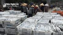 """""""Mở biển"""" đầu năm, ngư dân Quỳnh Lưu trúng đậm cá hố, thu hơn 1 tỷ đồng"""