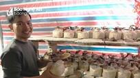 Quế Phong trồng thành công mô hình nấm linh chi
