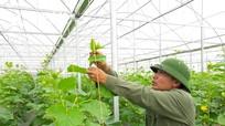 Kịch bản nào cho phát triển nông nghiệp Nghệ An?