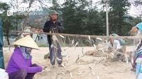 Ngư dân Quỳnh Lưu trúng đậm mùa cá trích