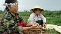 Nhà nông Thanh Chương thu 10 triệu đồng/sào từ hành tăm