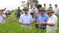 Tập đoàn TH tổ chức hội thảo giống lúa thương phẩm QJ1 chất lượng cao