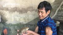Lão nông thu tiền triệu mỗi ngày từ nuôi ếch giống