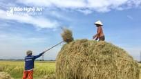 Sáng tạo trong phơi rơm và dùng rơm của nông dân Đô Lương