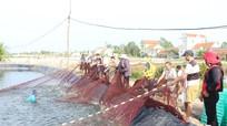 Nông dân kéo lưới rùng bắt tôm thuê kiếm tiền triệu mỗi ngày