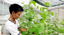 Bỏ việc chốn thành thị, kỹ sư về quê làm nông nghiệp công nghệ cao