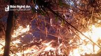 Mồi lửa từ nơi nấu cơm lam thiêu rụi 7ha rừng phòng hộ