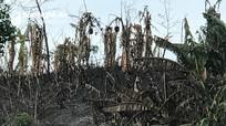 Quỳ Hợp: Cháy lớn thiêu rụi hơn 1ha chuối, 2 ha rừng tạp và 1 nhà dân