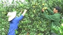 Trái cây đắt hàng mùa nóng