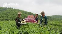 Anh Sơn: 5 năm chuyển giao KHKT cho hơn 10 nghìn lượt hộ nông dân