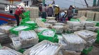 Ngư dân Quỳnh Lưu trúng đậm cá hố xuất khẩu