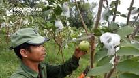 Khai hoang trồng ổi da xù Thái Lan, người đàn ông có thu nhập cao