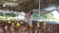 Người dân chuẩn bị nguồn gà sạch phục vụ thị trường Tết