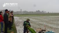 Nông dân Nghệ An áp dụng gieo mạ khay và cấy máy tiết kiệm chi phí