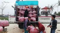 Nông dân Diễn Châu thu nhập cao từ ớt cay