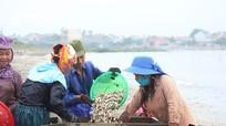Phân vùng sử dụng bãi triều nuôi trồng thủy sản