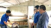 Khởi nghiệp từ mô hình nuôi lươn không bùn ở Nghĩa Đàn