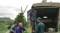 Nông dân Nghệ An thu từ bí xanh đầu vụ gần 200 triệu đồng/ha