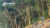 Nghệ An chuyển đổi mục đích sử dụng 113,7 ha rừng