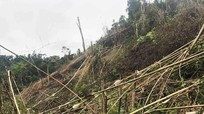 Nghệ An: Phát hiện Phó Chủ tịch xã phá 2,4 ha rừng