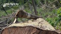 10 người dân 'tự giác' nhận lỗi trong vụ Phó Chủ tịch xã phá 2,4 ha rừng