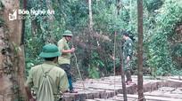 Nghệ An: Xác minh, làm rõ vụ việc rừng nguyên sinh Vườn Quốc gia Pù Mát bị xâm hại