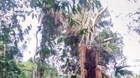 Vụ vườn Quốc gia Pù Mát bị xâm hại: Do người dân vào rừng lấy phong lan?